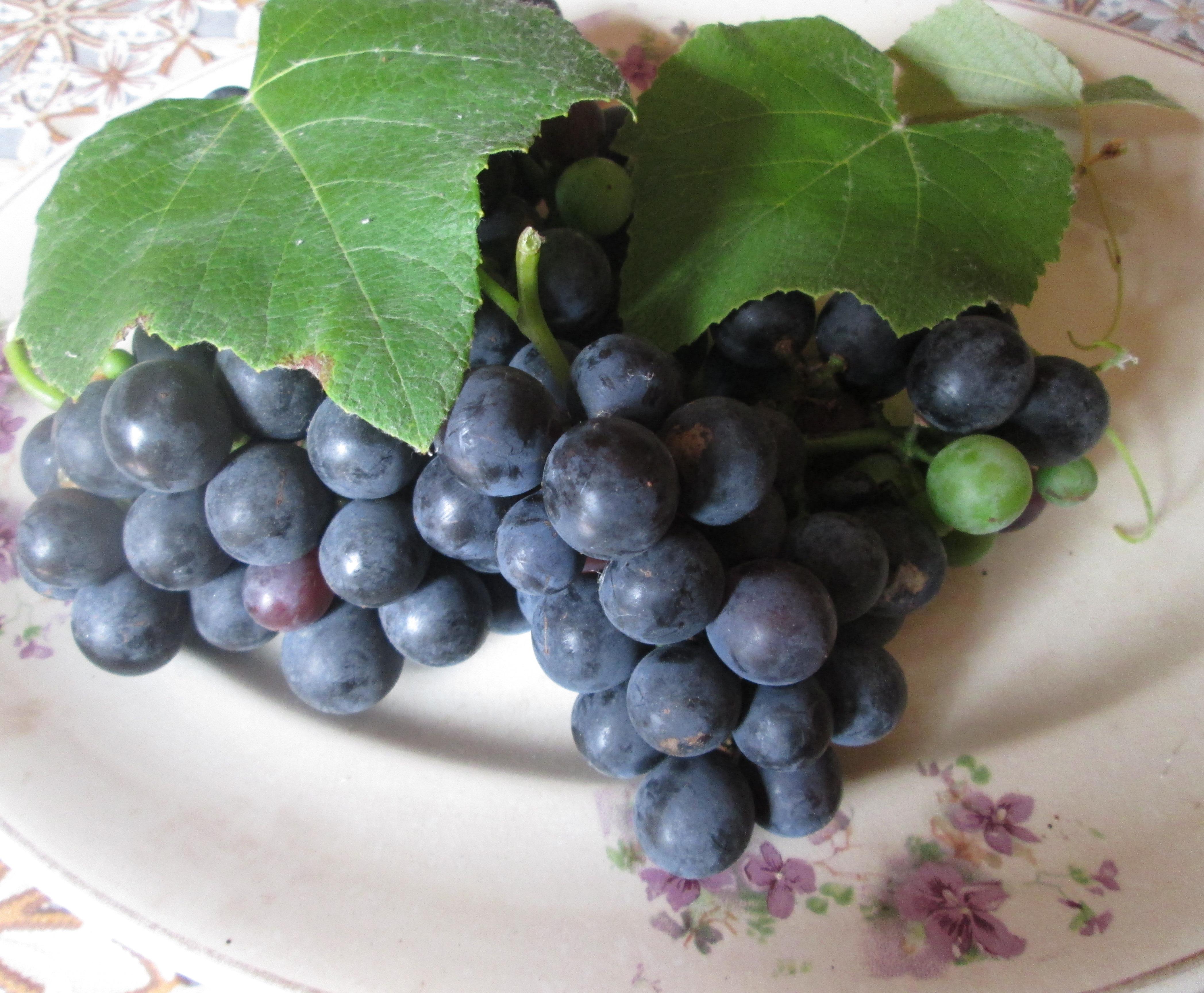 Torta con uva fragola e noci marsili notizie for Sognare uva fragola