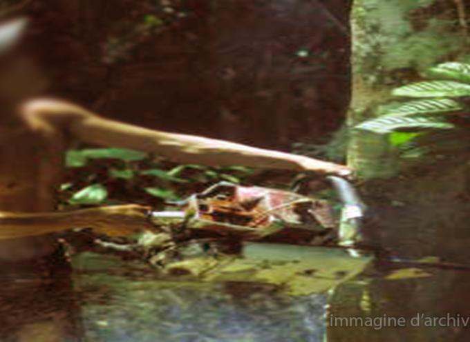 Longobucco, arrestati per furto di legna nel Parco della Sila