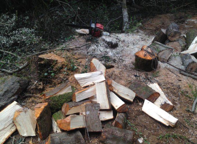 Rubavano legna disboscando la montagna: arrestati