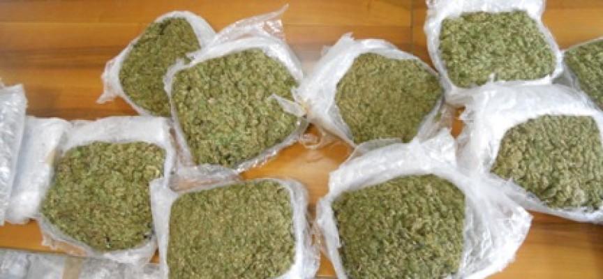 """Tirreno: Coltivavano Marijuana a fini di spaccio. 3 Arresti e 200 piante """"out"""""""
