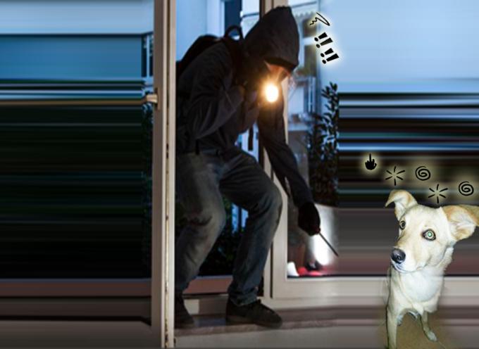 Paola – Aumenta l'allarme per furti in appartamento [CANE SVENTA ULTIMO TENTATIVO]