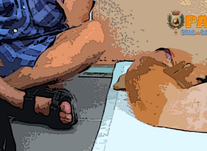 Cucciola salvata a Paola – Ora è in Sicilia, il padrone ringrazia