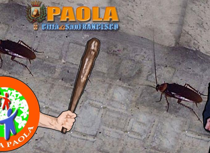 Cambia Paola: dopo le larve è guerra contro gli scarafaggi [«Ferrari faccia il sindaco!»]