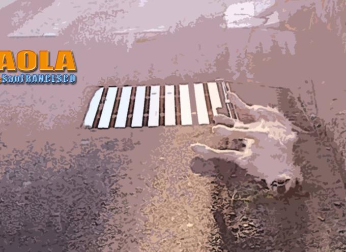Paola – Oltre 8mila euro per il trattamento degli animali morti per strada