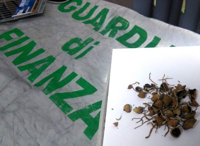 Tirreno – Coltivava Funghi Allucinogeni. Denunciato 23enne