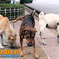 Calabria – Lotta al Randagismo: gli animalisti incontrano Anci, Asp e Scura