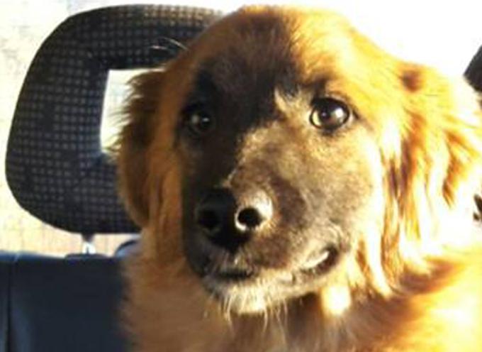 URGENTISSIMO – Ritrovato cucciolo sulla SS18 nei pressi del Bivio Croce