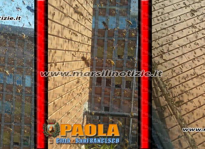 Paola – Invasione di imenotteri all'ospedale San Francesco