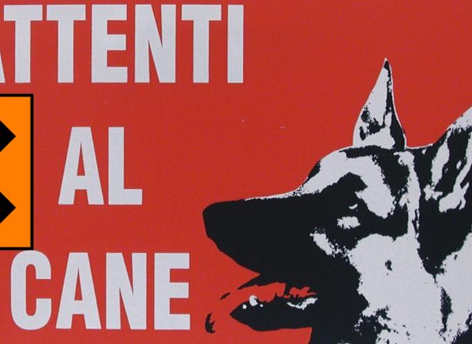 San Lucido – Attenti al Cane (perché qualcuno vuole avvelenarlo)