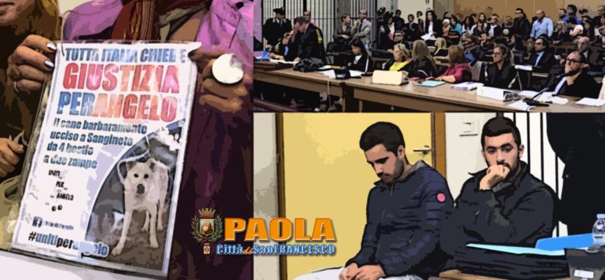 """Paola – Chiesta massima pena per gli """"aguzzini"""" del cane Angelo – VIDEO"""