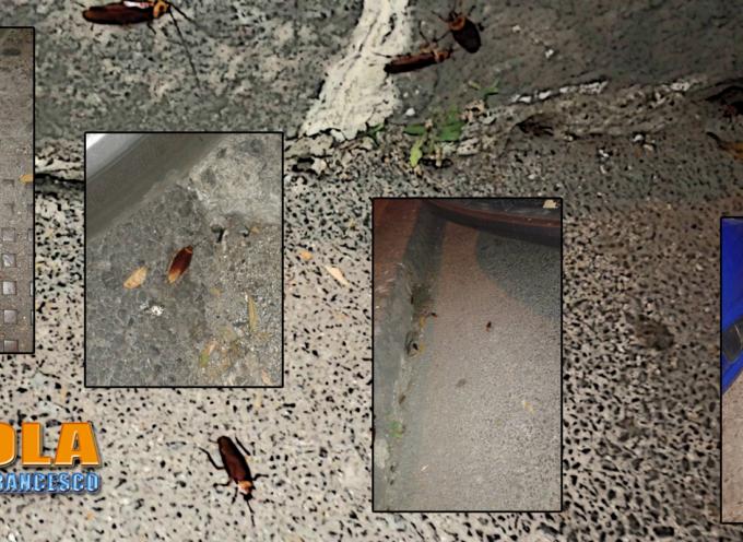 Paola – Infestazione di blatte in centro (la dove si tengono i comizi)