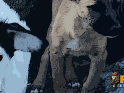 Paola – Sulla spiaggia, tra le rocce a nord del litorale, 3 cuccioli da salvare