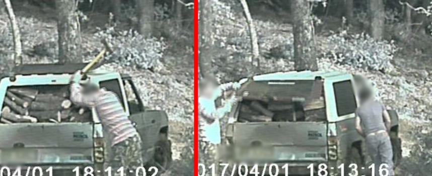 Rubavano legna depredando la montagna, misure cautelari per 2 persone