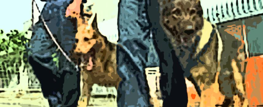"""Sull'autobus trasportando marijuana: """"braccati"""" dal fiuto dei cani della GdF"""
