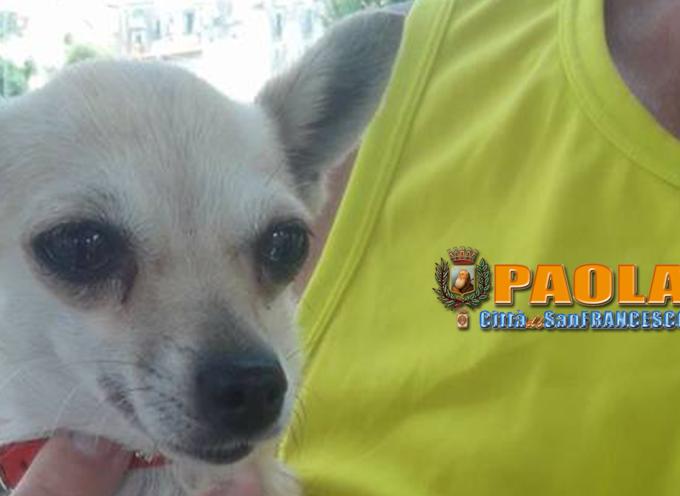 URGENTE – Rintracciato cagnolino perso al mercato: si cercano i padroni