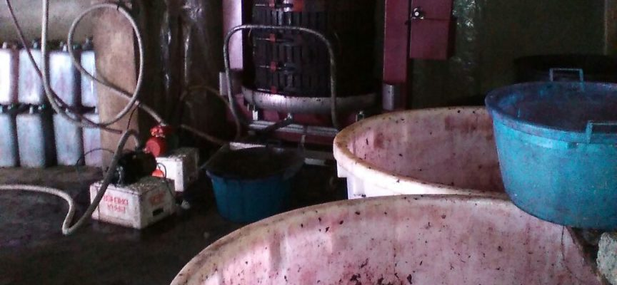 Vino, alimenti e suini d'allevamento:sequestro della GdF nel cosentino