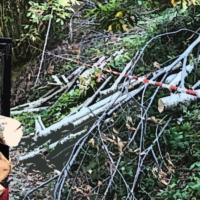 Trafugavano legna e volevano farla franca celando motosega: 2 denunciati