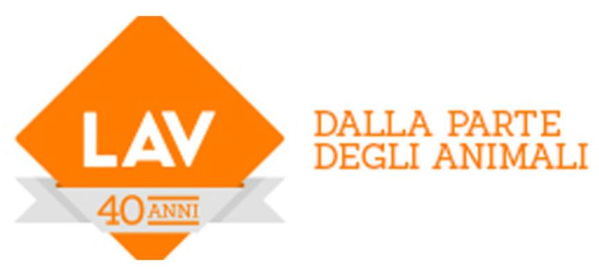 """Calabria – La LAV di Vibo aderisce allo sciopero """"Global Strike for Future"""""""