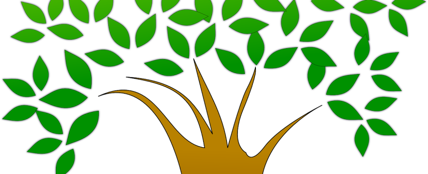 Laurea in economia ecosostenibile