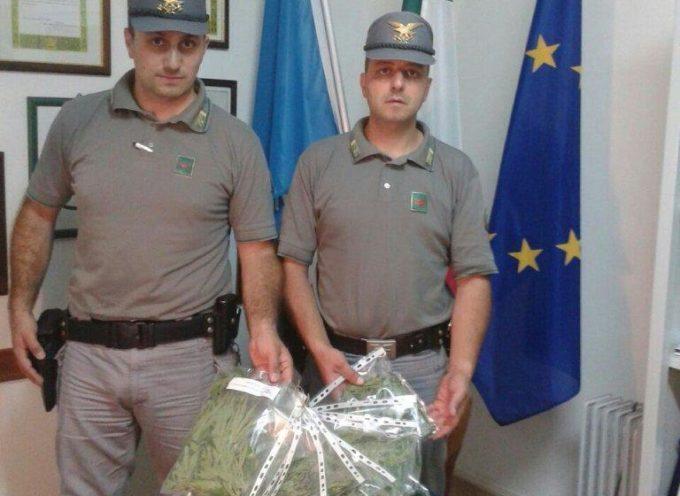 Coltivava Cannabis nei boschi, arrestato in flagranza di reato