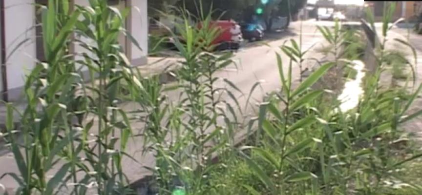 [SITUAZIONE FIUMARE] Un torrente paolano potrebbe vomitare anche verdura [VIDEO]