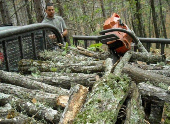 Continuano i furti di legna nel Parco Nazionale della Sila