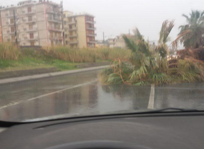 """Sul lungomare di Paola una palma si """"spalma"""" sull'asfalto [FOTO]"""