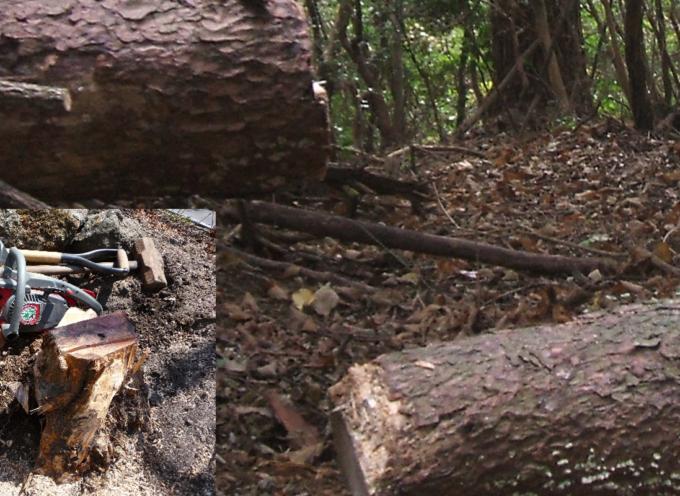 """Furto di legna in montagna: un arresto. Forestale """"intimidito"""""""