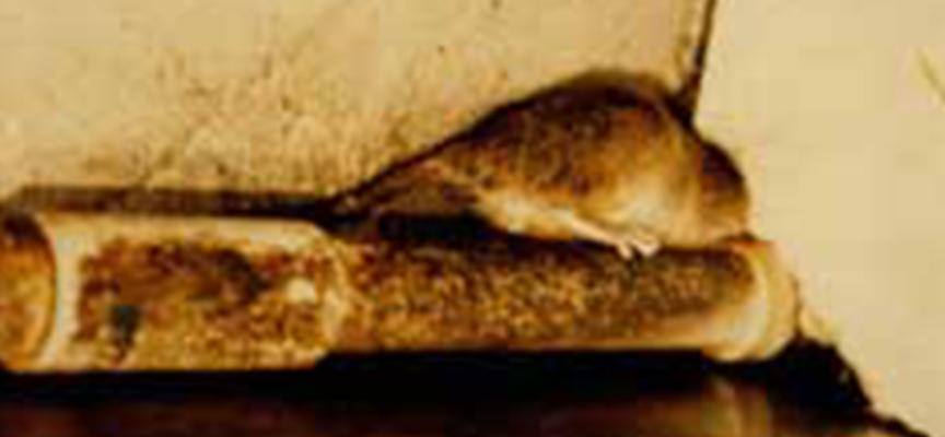 Paola – Rione Colonne nel degrado [Topi in casa e cani liberi d'azzannare, la fogna…]