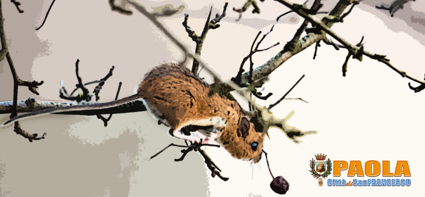 Paola – Avvistati sorci arboricoli nella Villa Comunale