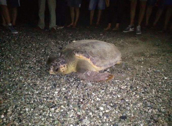 Fiumefreddo. Si attende la nascita delle tartarughe