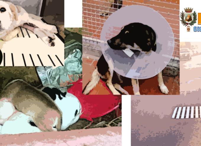 VITA DA CANI A PAOLA – Cuccioli bisognosi e adulti in pericolo