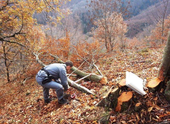 Furto di legna e taglio abusivo in montagna: indagate due persone