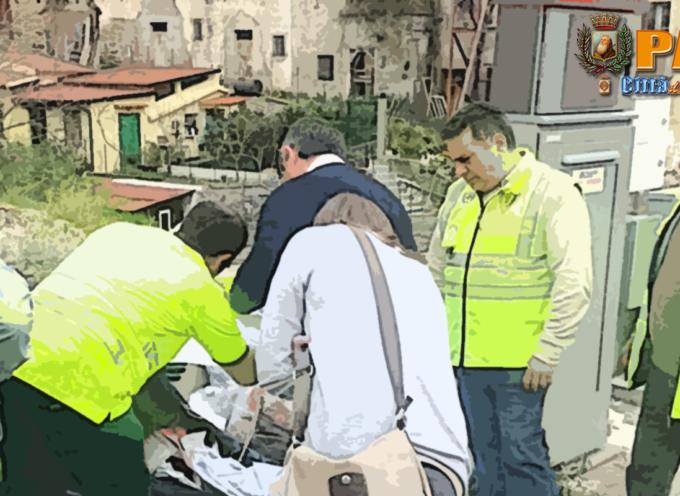 Paola – Continua l'opera di controllo del Nucleo Ambientale
