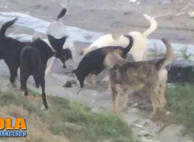 """Paola – Civici cani """"derattizzano"""" la spiaggia. FOTO DOCUMENTALI"""