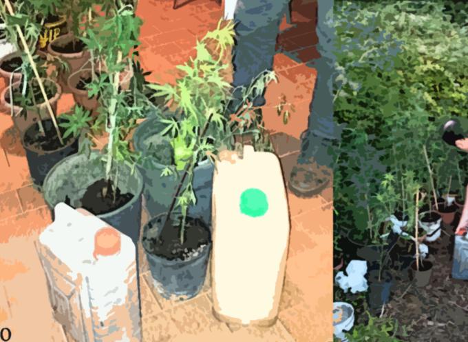 San Lucido – Coltivava Marijuana con lo scopo di spacciarla: ARRESTATO