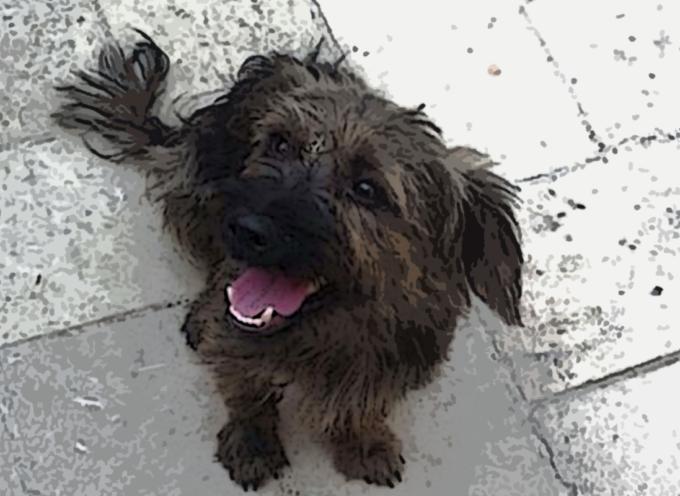 Cuccioli da Salvare – Ritrovato un cagnolino a San Lucido (cerca casa)