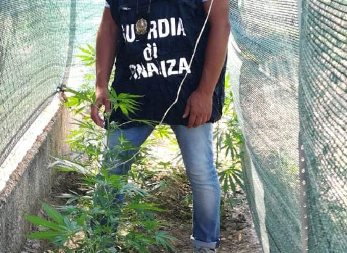 """Marijuana fatta crescere in giardino: la GdF arresta """"coltivatore domestico"""""""