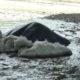 VIDEO – Tra Paola e Fuscaldo la lana di vetro va direttamente a mare
