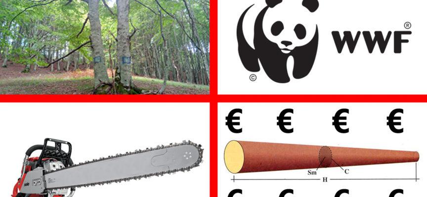 Quanto costa il legno di Faggio a m³? Pure il Wwf difende Cozzo Cervello