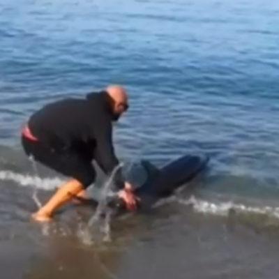VIDEO – Delfino spiaggiato ai Bracci (T): eroico salvataggio di un bagnante