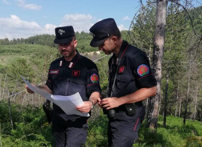 Speculavano sul bosco: tre persone denunciate per truffa sui finanziamenti