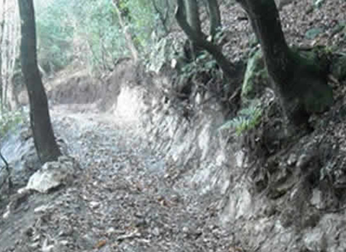 """Agronomi e Forestali calabresi: «ora tutti """"esperti"""" su agricoltura e boschi»"""