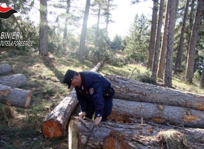 Tagli furtivi in montagna: i Carabinieri Forestali denunciano tre individui